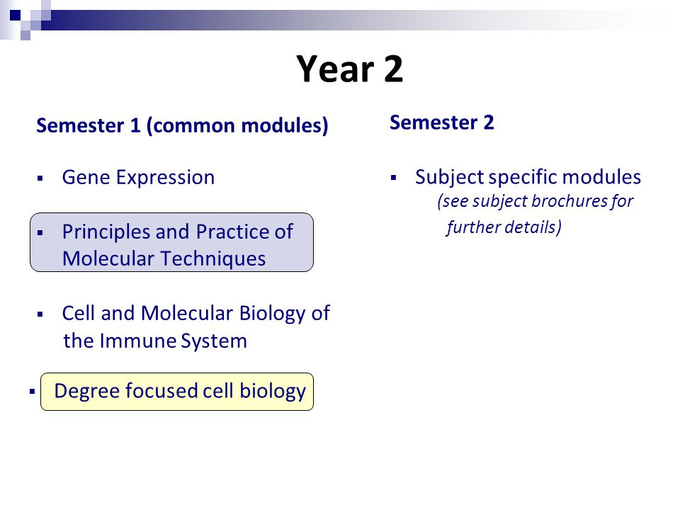 Year 2 Semester 1 (common modules)  Gene Expression  Principles and Practice of Molecular Techniques  Cell and Molecular Biology of the Immune System Semester 2  Subject specific modules (see subject brochures for further details)  Degree focused cell biology