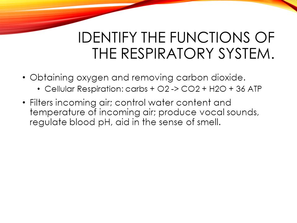 IDENTIFY THE FUNCTIONS OF THE RESPIRATORY SYSTEM. Obtaining oxygen and removing carbon dioxide.