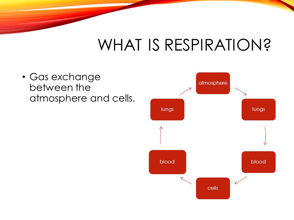 WHAT IS RESPIRATION. Gas exchange between the atmosphere and cells.
