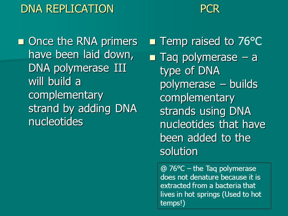 DNA REPLICATION Once the RNA primers have been laid down, DNA polymerase III will build a complementary strand by adding DNA nucleotides Once the RNA primers have been laid down, DNA polymerase III will build a complementary strand by adding DNA nucleotidesPCR Temp raised to Temp raised to 76°C Taq polymerase – a type of DNA polymerase – builds complementary strands using DNA nucleotides that have been added to the solution Taq polymerase – a type of DNA polymerase – builds complementary strands using DNA nucleotides that have been added to the 76°C – the Taq polymerase does not denature because it is extracted from a bacteria that lives in hot springs (Used to hot temps!)