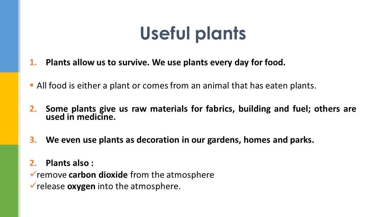 Plants allow us to survive. We use plants every day for food.