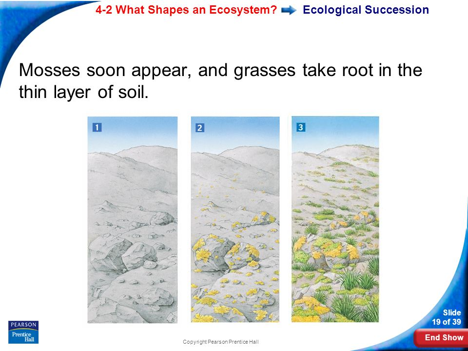 End Show 4-2 What Shapes an Ecosystem.