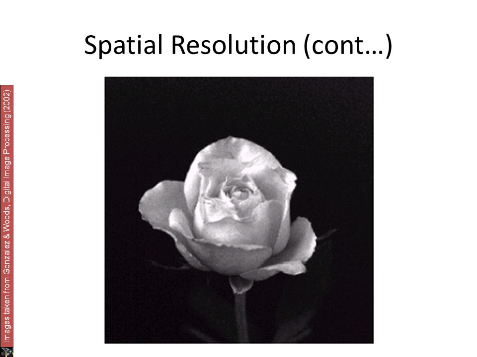 Spatial Resolution (cont…) Images taken from Gonzalez & Woods, Digital Image Processing (2002)