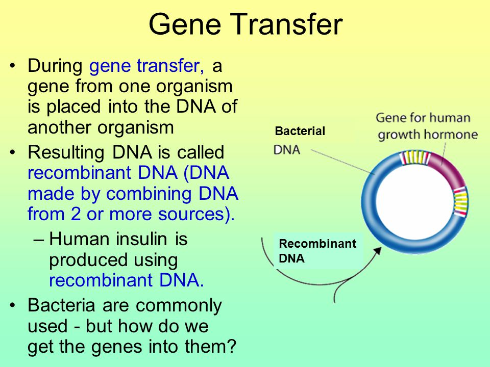 Gene Transfer During gene transfer, a gene from one organism is placed into the DNA of another organism Resulting DNA is called recombinant DNA (DNA made by combining DNA from 2 or more sources).