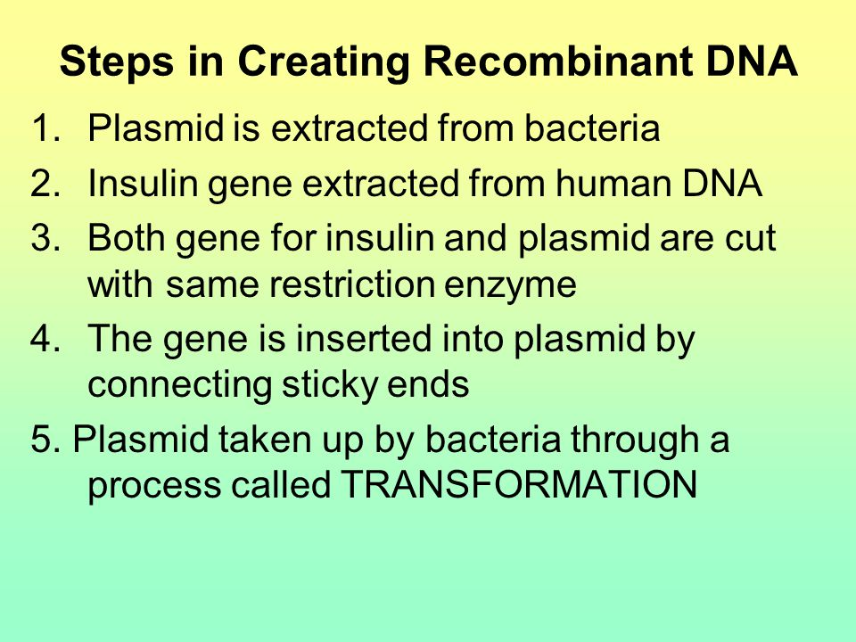Steps in Creating Recombinant DNA 1.Plasmid is extracted from bacteria 2.Insulin gene extracted from human DNA 3.Both gene for insulin and plasmid are cut with same restriction enzyme 4.The gene is inserted into plasmid by connecting sticky ends 5.