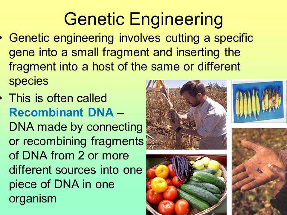 Genetic Engineering Genetic engineering involves cutting a specific gene into a small fragment and inserting the fragment into a host of the same or different species This is often called Recombinant DNA – DNA made by connecting or recombining fragments of DNA from 2 or more different sources into one piece of DNA in one organism