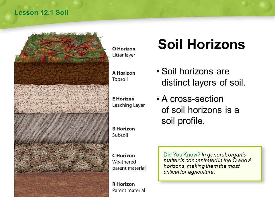 soil profile worksheet Termolak – Soil Horizons Worksheet