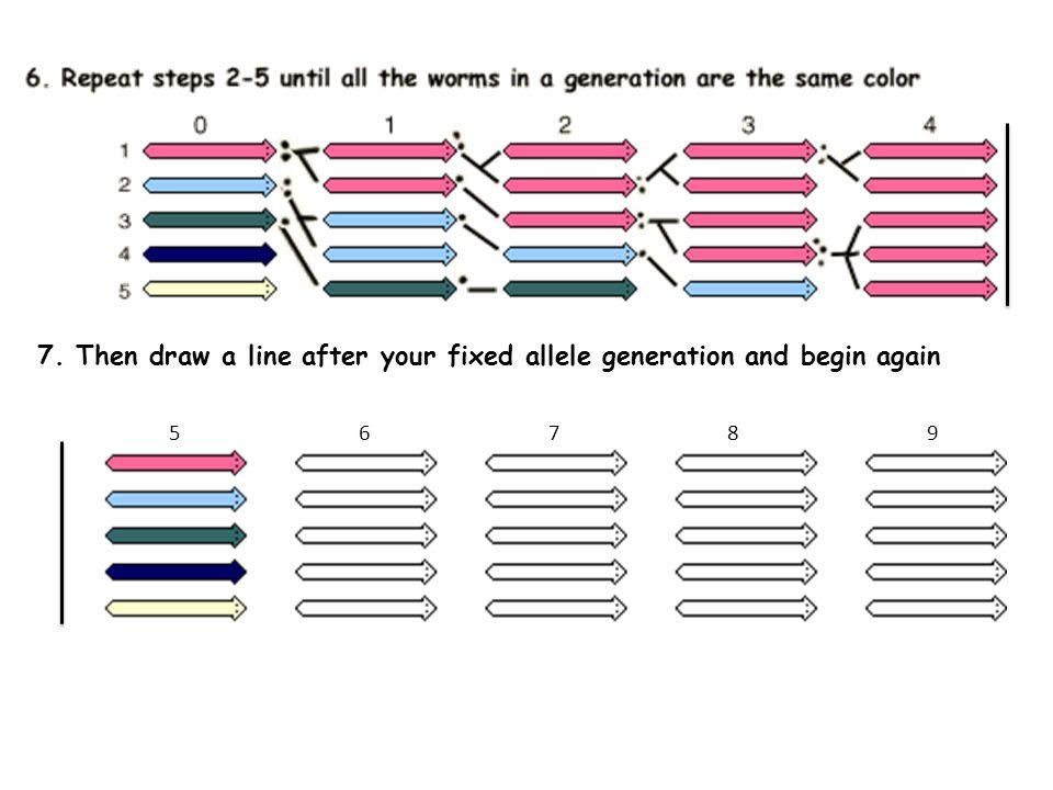 Genetic Drift Activity ppt video online download – Genetic Drift Worksheet