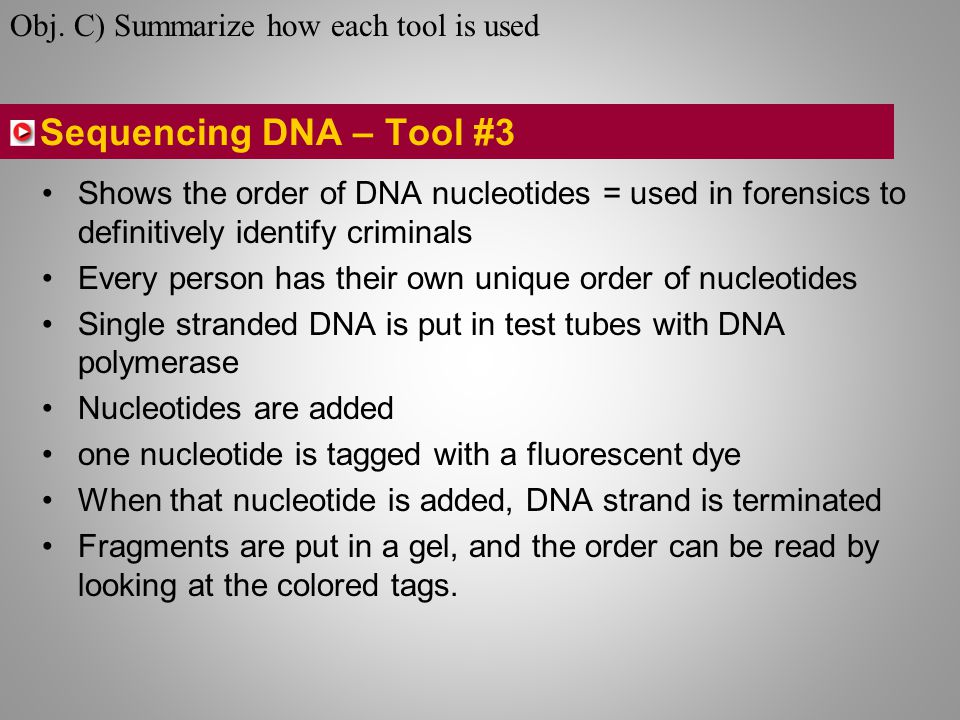 Sequencing DNA – Tool #3 Shows the order of DNA nucleotides = used in forensics to definitively identify criminals Every person has their own unique order of nucleotides Single stranded DNA is put in test tubes with DNA polymerase Nucleotides are added one nucleotide is tagged with a fluorescent dye When that nucleotide is added, DNA strand is terminated Fragments are put in a gel, and the order can be read by looking at the colored tags.