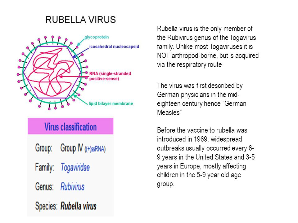 Rubella virus is the only member of the Rubivirus genus of the Togavirus family.