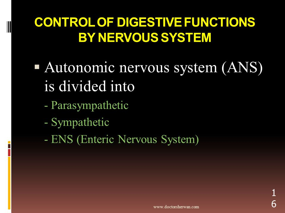 CONTROL OF DIGESTIVE FUNCTIONS BY NERVOUS SYSTEM  Autonomic nervous system (ANS) is divided into - Parasympathetic - Sympathetic - ENS (Enteric Nervous System)