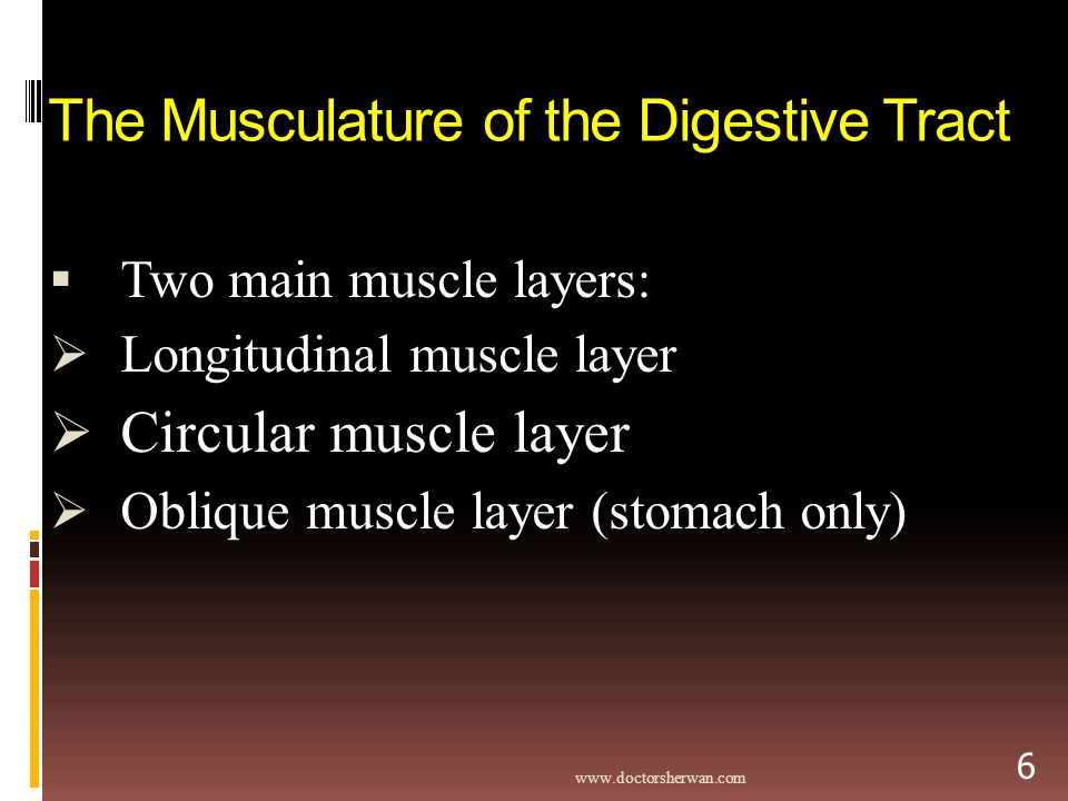The Musculature of the Digestive Tract  Two main muscle layers:  Longitudinal muscle layer  Circular muscle layer  Oblique muscle layer (stomach only)   6