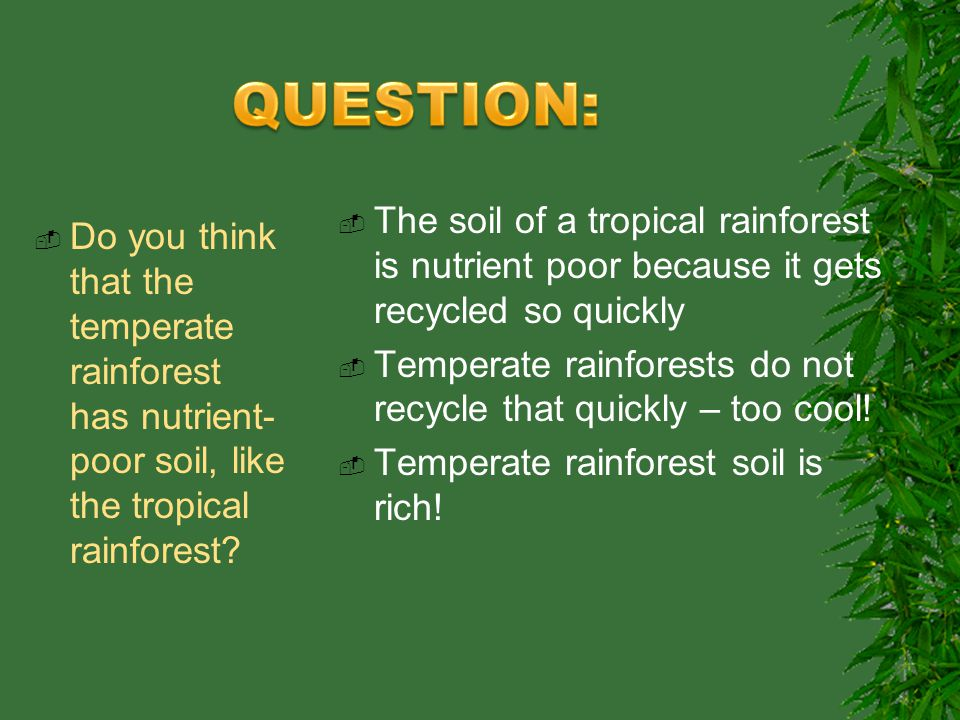 Tropical and temperate ?rainforest?
