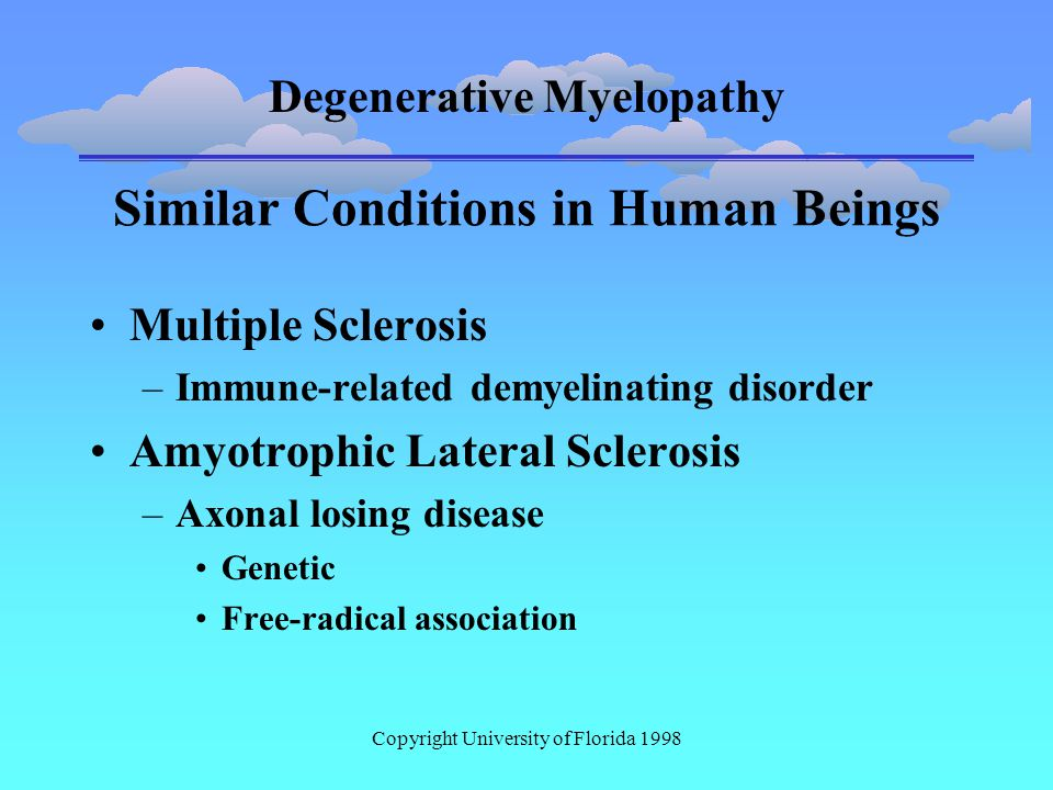 Degenerative Myelopathy Copyright University of Florida 1998 Similar Conditions in Human Beings Multiple Sclerosis –Immune-related demyelinating disorder Amyotrophic Lateral Sclerosis –Axonal losing disease Genetic Free-radical association