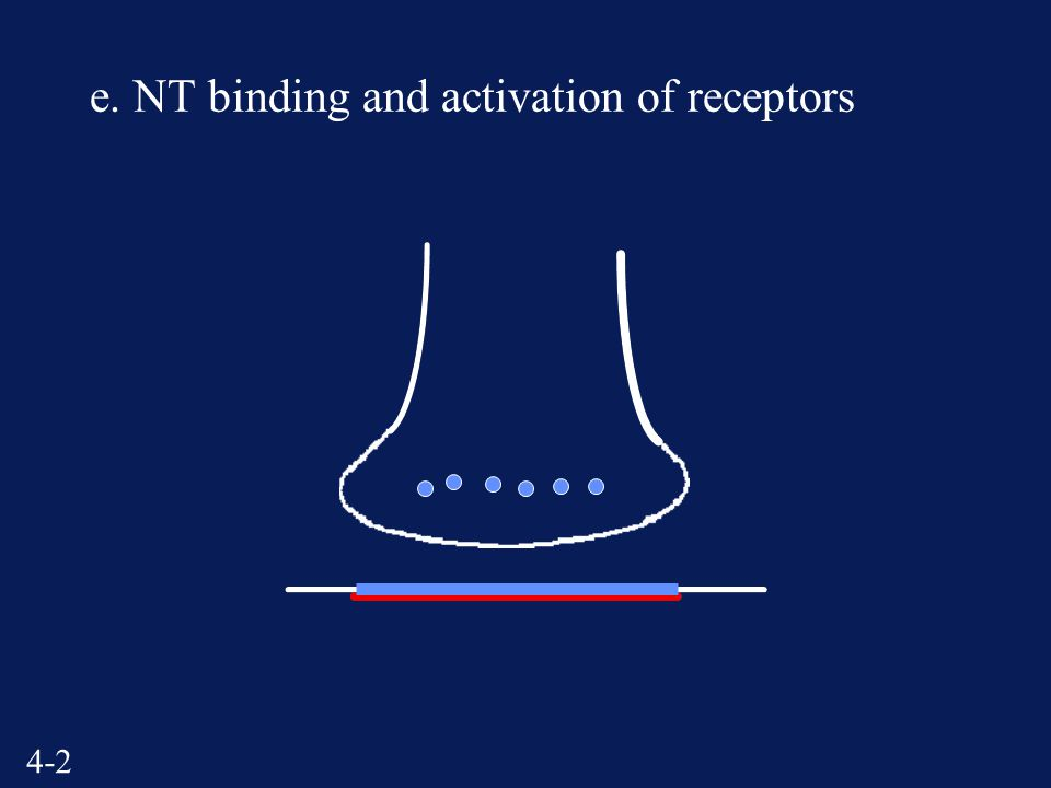 4-2 e. NT binding and activation of receptors