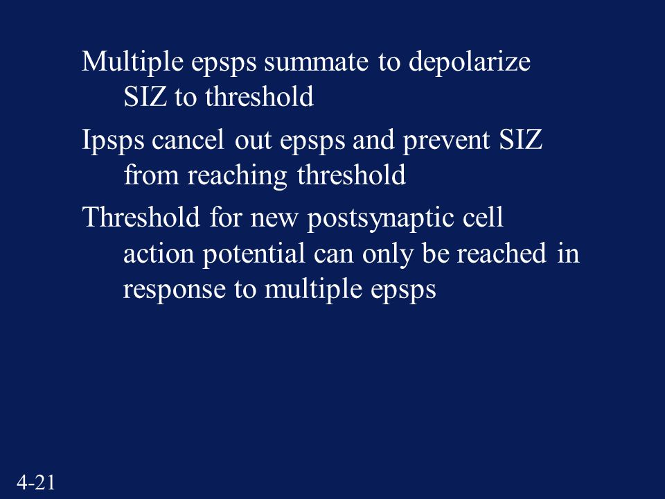 4-21 Multiple epsps summate to depolarize SIZ to threshold Ipsps cancel out epsps and prevent SIZ from reaching threshold Threshold for new postsynaptic cell action potential can only be reached in response to multiple epsps