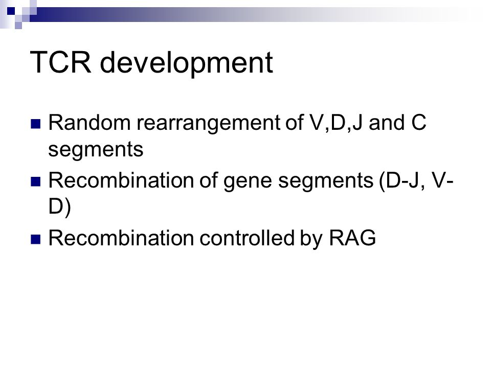 TCR development Random rearrangement of V,D,J and C segments Recombination of gene segments (D-J, V- D) Recombination controlled by RAG