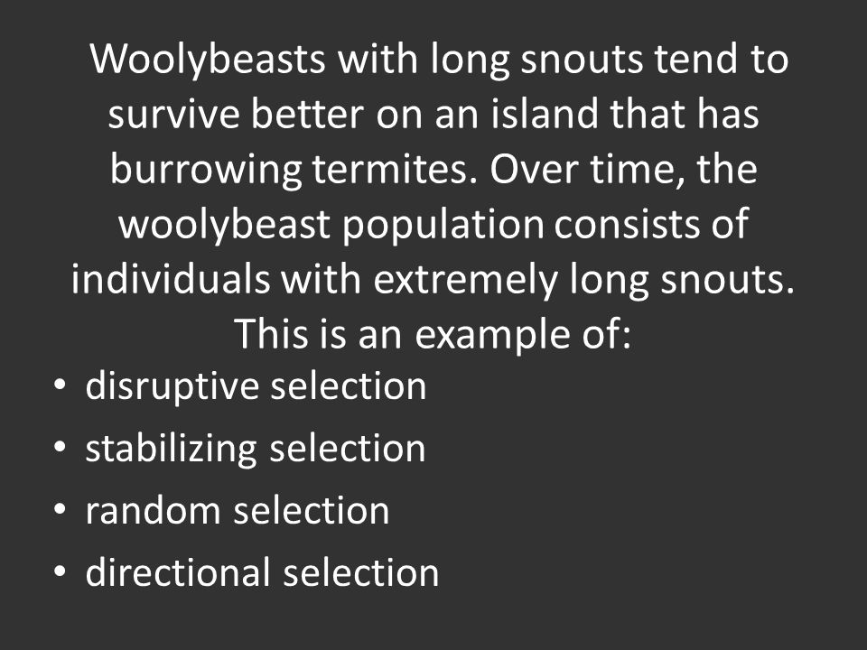 Woolybeasts with long snouts tend to survive better on an island that has burrowing termites.