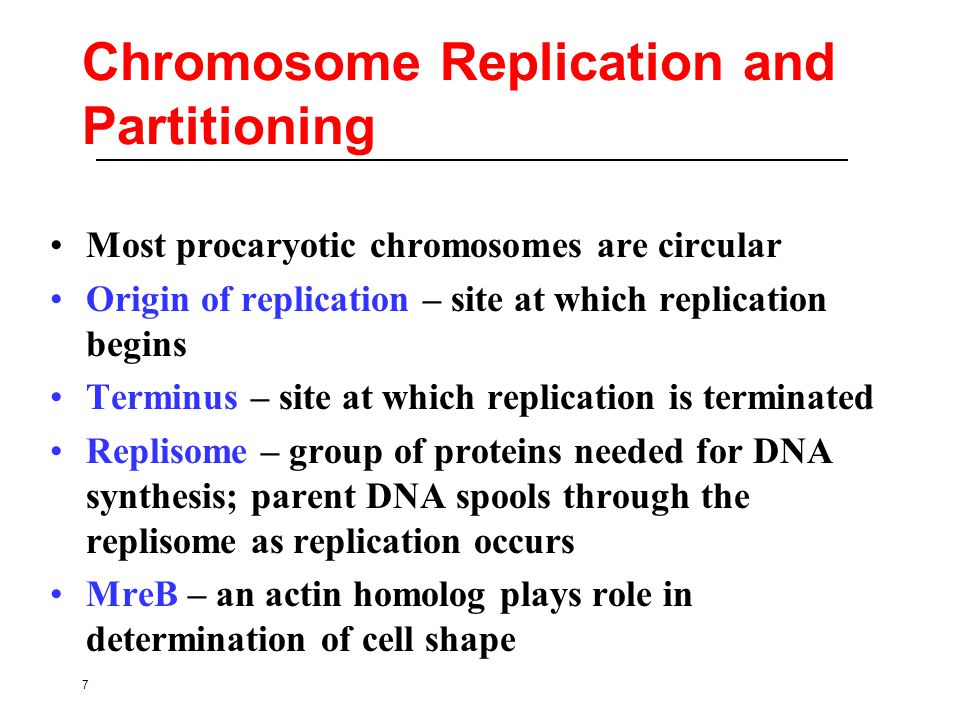 7 Chromosome Replication and Partitioning Most procaryotic chromosomes are circular Origin of replication – site at which replication begins Terminus – site at which replication is terminated Replisome – group of proteins needed for DNA synthesis; parent DNA spools through the replisome as replication occurs MreB – an actin homolog plays role in determination of cell shape