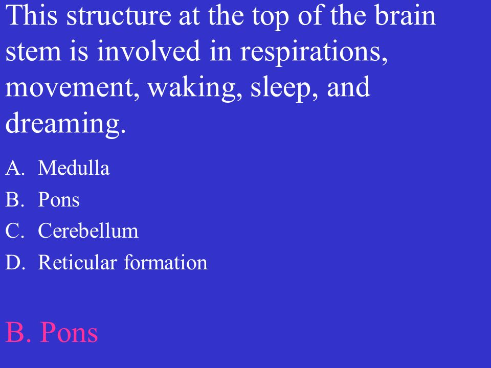 This structure at the top of the brain stem is involved in respirations, movement, waking, sleep, and dreaming. A.Medulla B.Pons C.Cerebellum D.Reticu