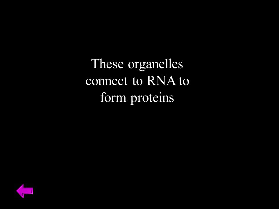 These organelles connect to RNA to form proteins