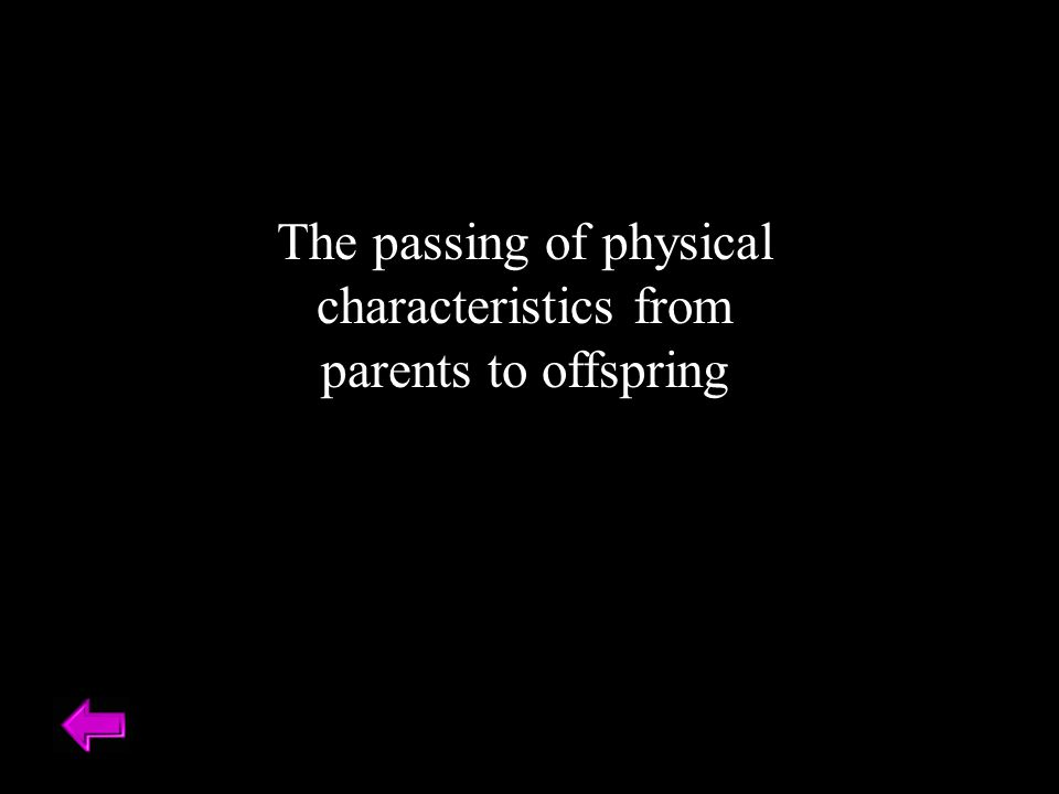 The passing of physical characteristics from parents to offspring