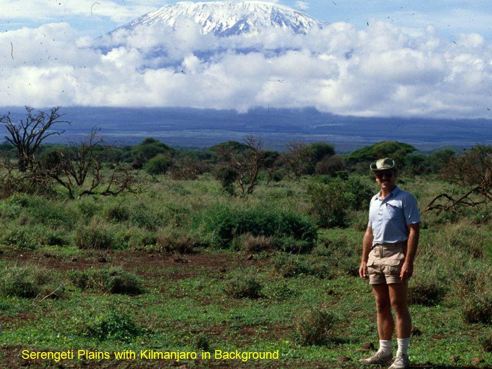 Serengeti Plains with Kilmanjaro in Background