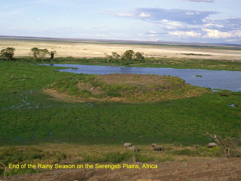 End of the Rainy Season on the Serengeti Plains, Africa