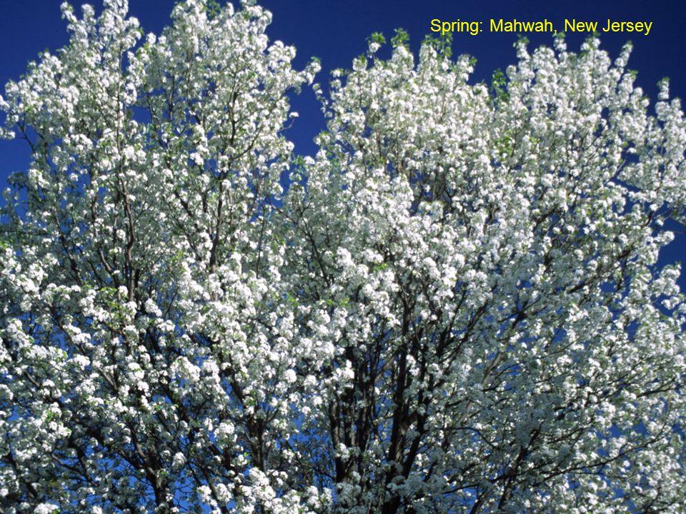 Spring: Mahwah, New Jersey
