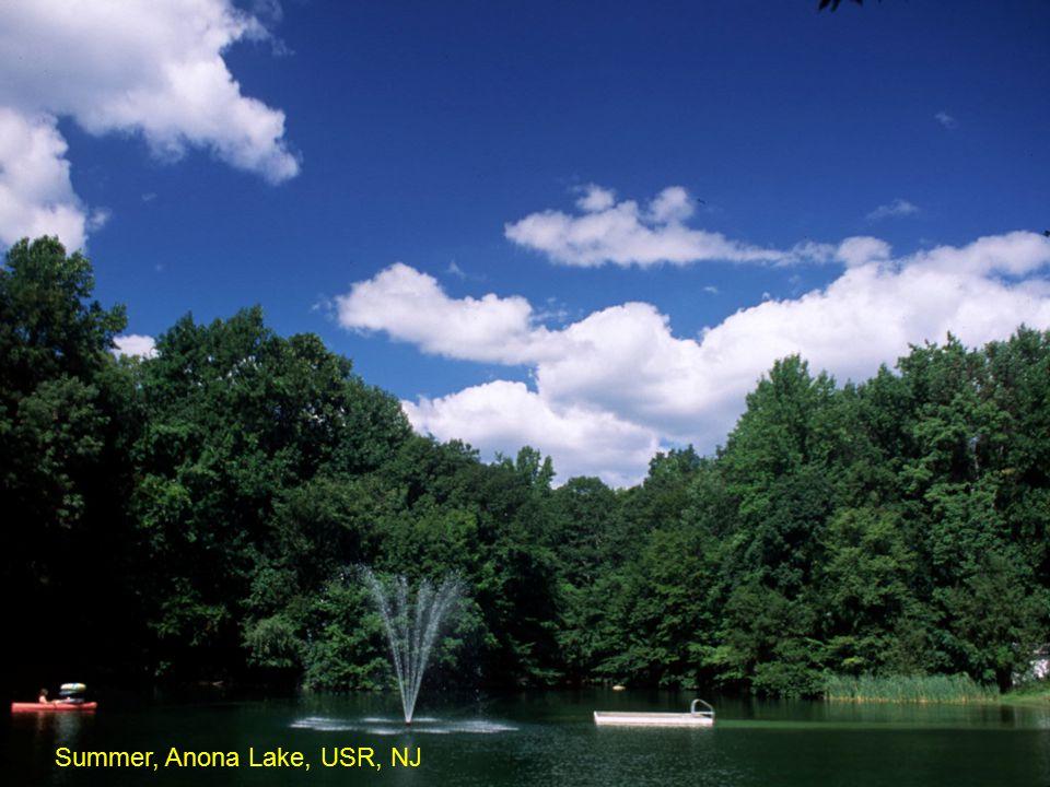 Summer, Anona Lake, USR, NJ