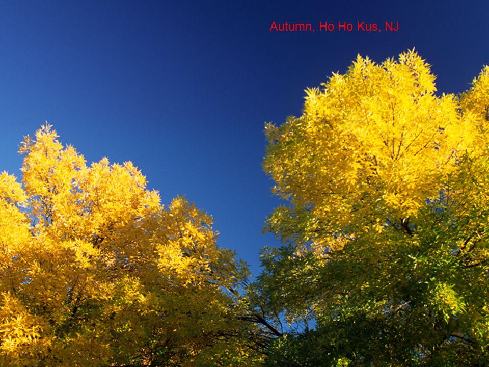 Autumn, Ho Ho Kus, NJ