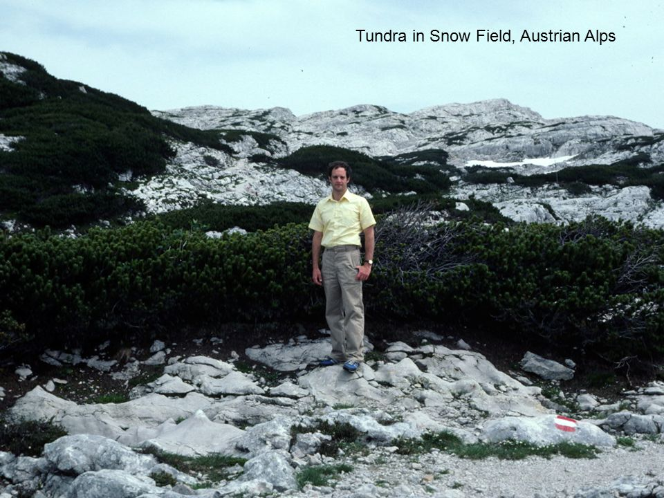 Tundra in Snow Field, Austrian Alps