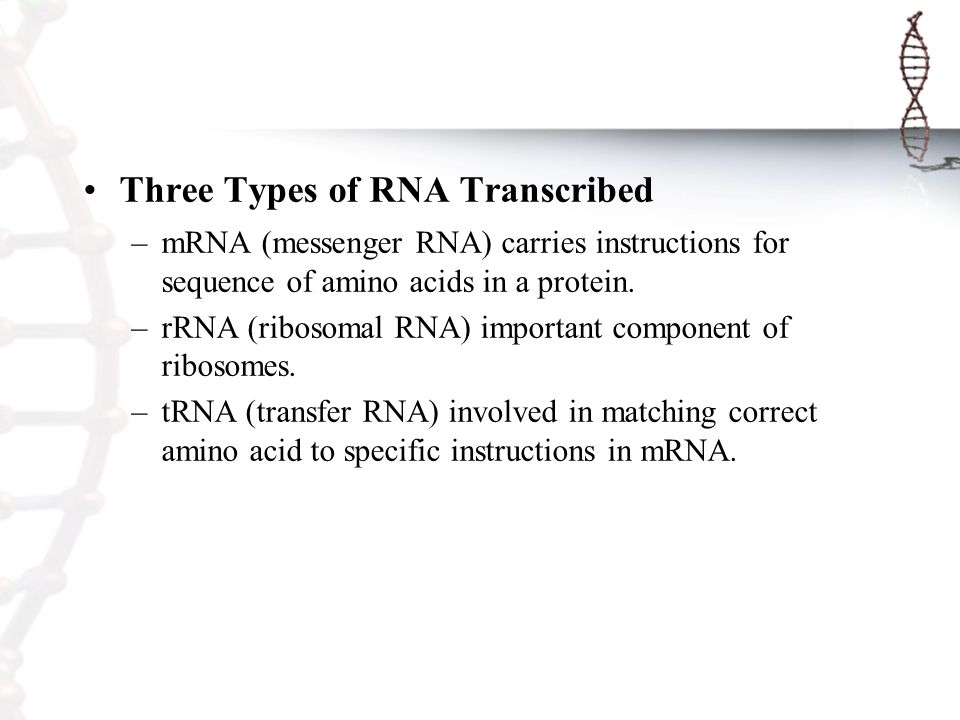 1 Chapter IV Genetics DNA and Protein Synthesis Yalun Arifin ...