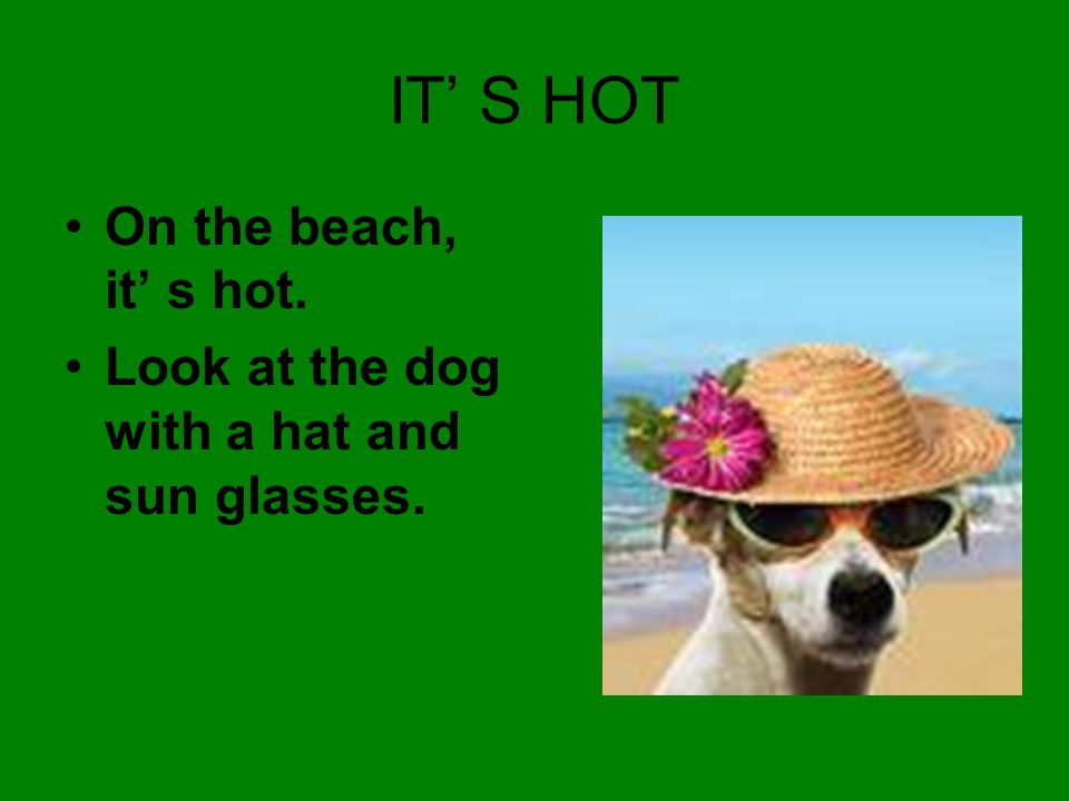 IT' S HOT On the beach, it' s hot. Look at the dog with a hat and sun glasses.