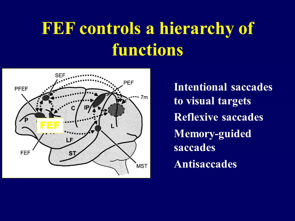 FEF controls a hierarchy of functions Intentional saccades to visual targets Reflexive saccades Memory-guided saccades Antisaccades FEF