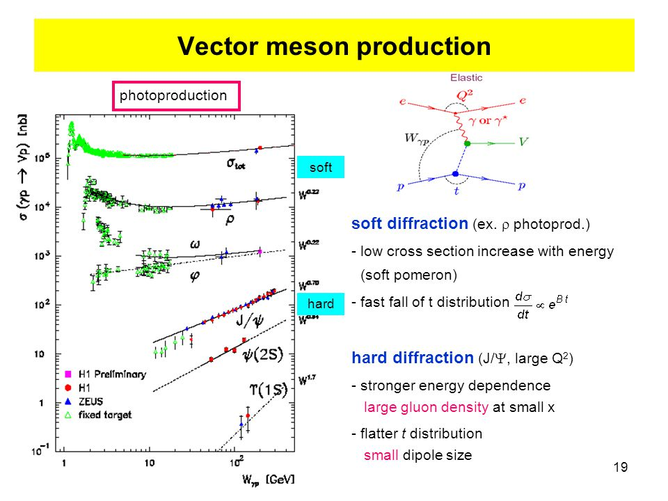 19 Vector meson production photoproduction soft diffraction (ex.