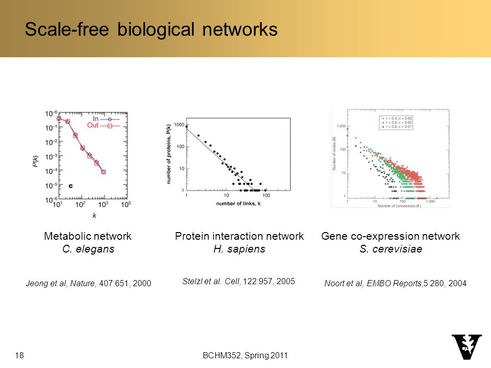 BCHM352, Spring Scale-free biological networks Jeong et al, Nature, 407:651, 2000Noort et al, EMBO Reports,5:280, 2004 Stelzl et al.