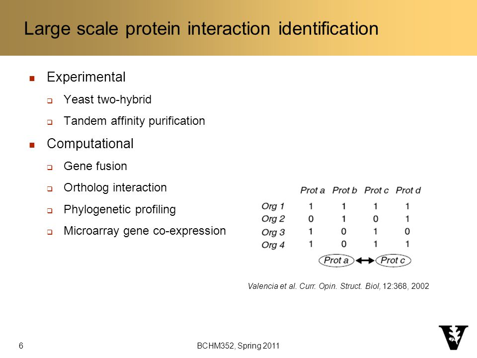 BCHM352, Spring 2011 Large scale protein interaction identification Experimental  Yeast two-hybrid  Tandem affinity purification Computational  Gene fusion  Ortholog interaction  Phylogenetic profiling  Microarray gene co-expression Valencia et al.