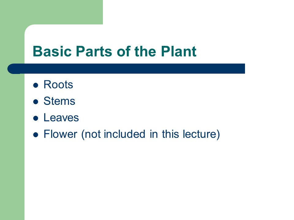 Basic Parts of the Plant Roots Stems Leaves Flower (not included in this lecture)