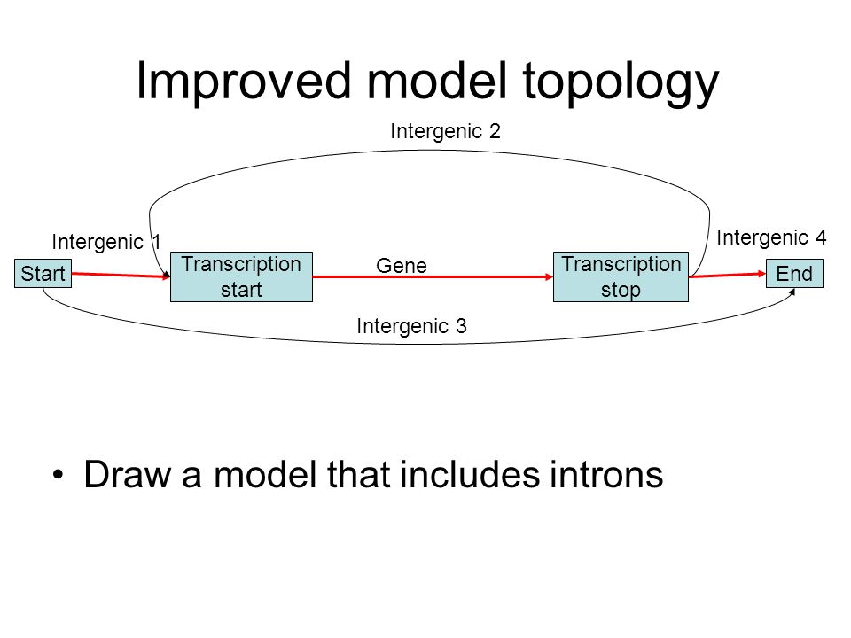 Improved model topology Draw a model that includes introns Transcription stop Transcription start StartEnd Gene Intergenic 2 Intergenic 1 Intergenic 4 Intergenic 3