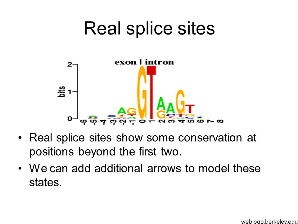 Real splice sites Real splice sites show some conservation at positions beyond the first two.