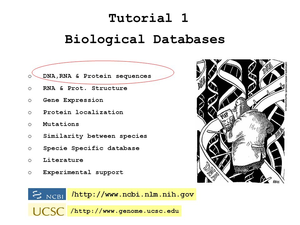 Biological Databases Tutorial 1   /   o DNA,RNA & Protein sequences o RNA & Prot.