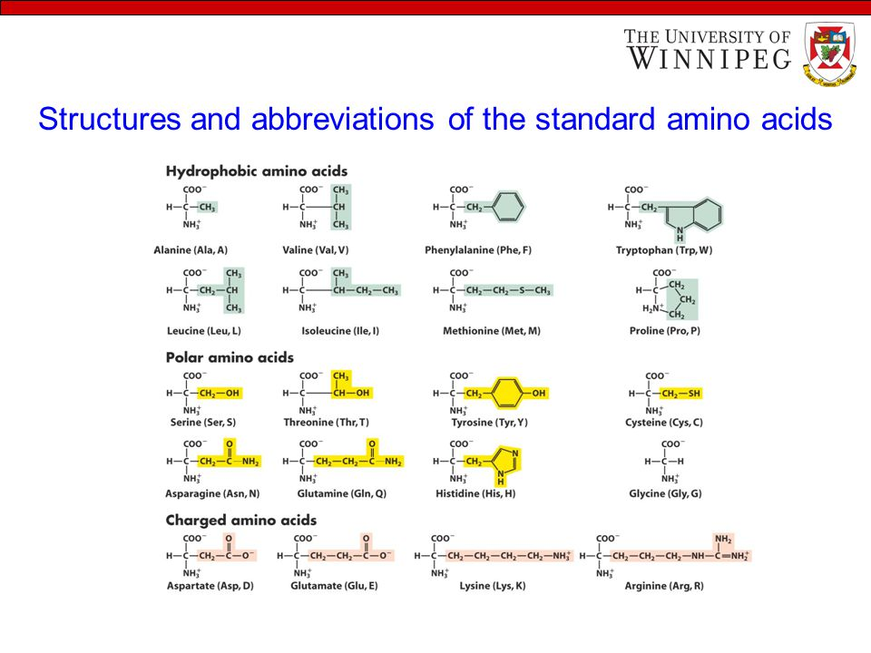 Welcome to class of amino acids dr meera kaur learning objectives 12 structures and abbreviations of the standard amino acids structures and abbreviations thecheapjerseys Choice Image
