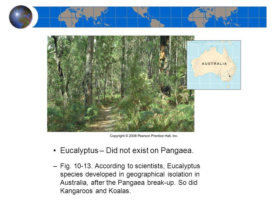 Eucalyptus – Did not exist on Pangaea. –Fig. 10-13.