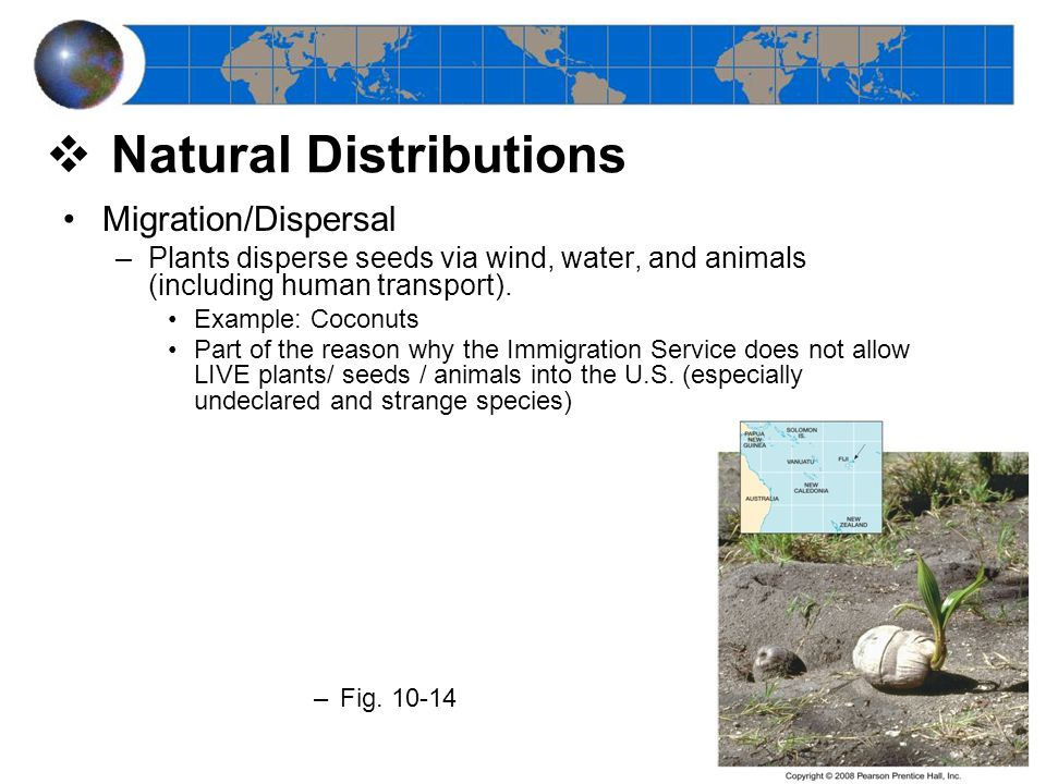 Migration/Dispersal –Plants disperse seeds via wind, water, and animals (including human transport).