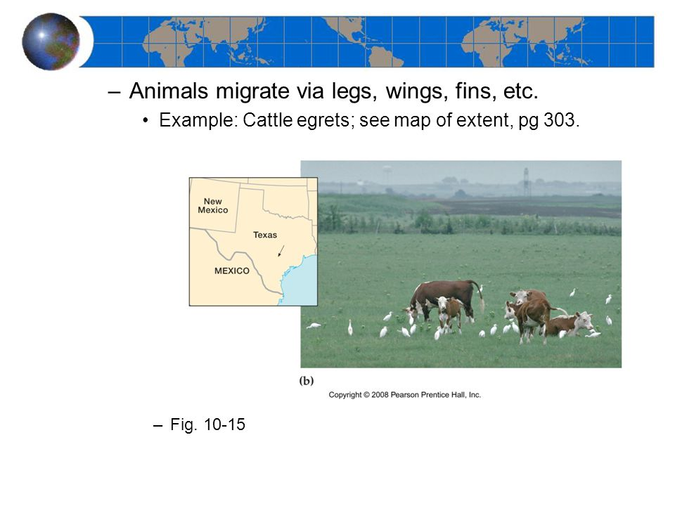 –Animals migrate via legs, wings, fins, etc. Example: Cattle egrets; see map of extent, pg 303.