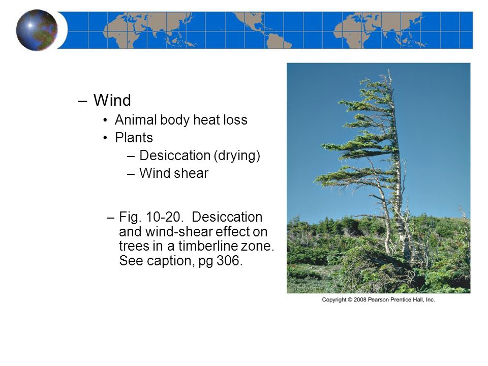 –Wind Animal body heat loss Plants –Desiccation (drying) –Wind shear –Fig.