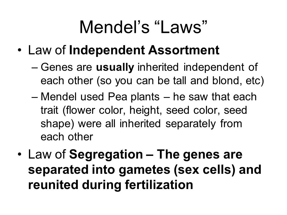 Mendel's Laws Law of Independent Assortment –Genes are usually inherited independent of each other (so you can be tall and blond, etc) –Mendel used Pea plants – he saw that each trait (flower color, height, seed color, seed shape) were all inherited separately from each other Law of Segregation – The genes are separated into gametes (sex cells) and reunited during fertilization