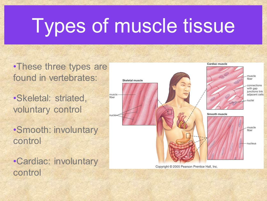 types of muscles Webmd describes the classifications of pain and explains what pain types and classifications in this set off by trigger points located in the body's muscles.