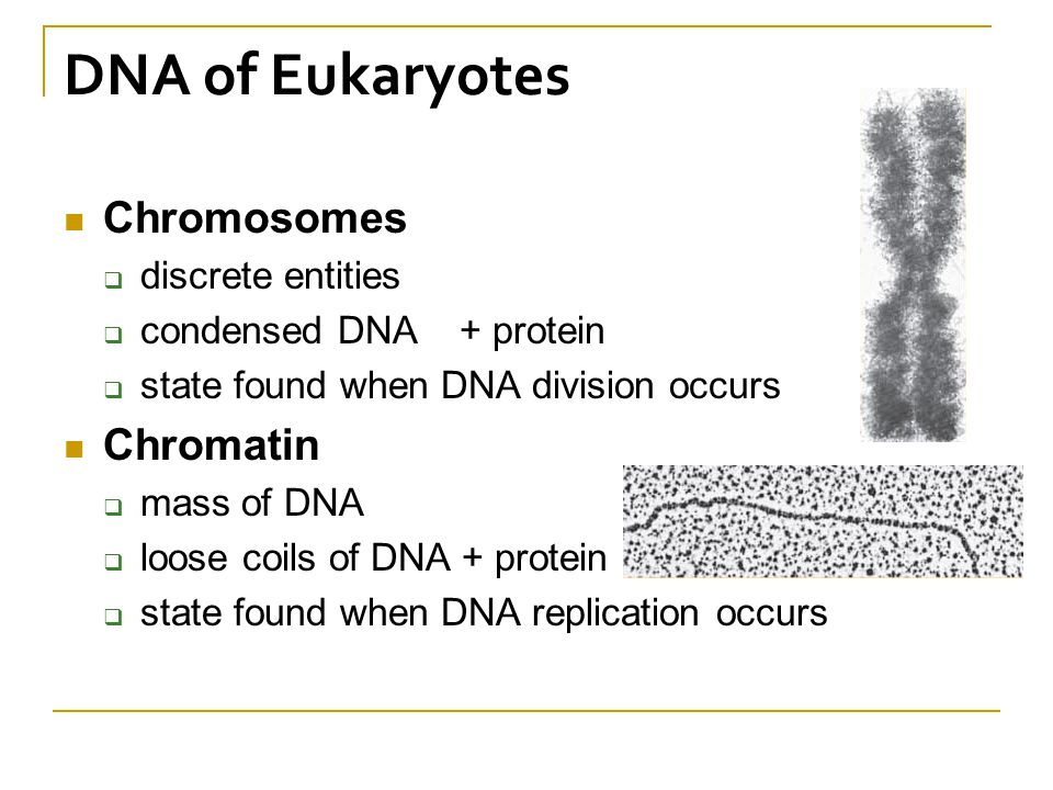 Mass of dna per cell